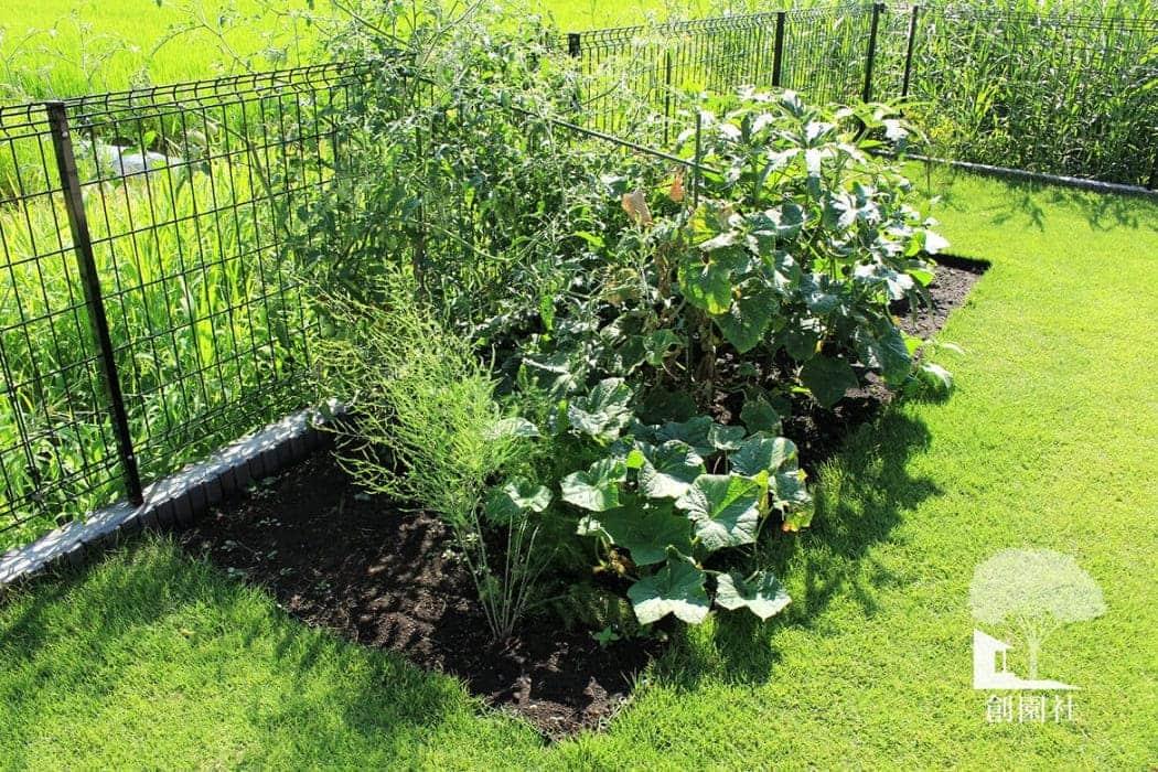 高崎市 家庭菜園