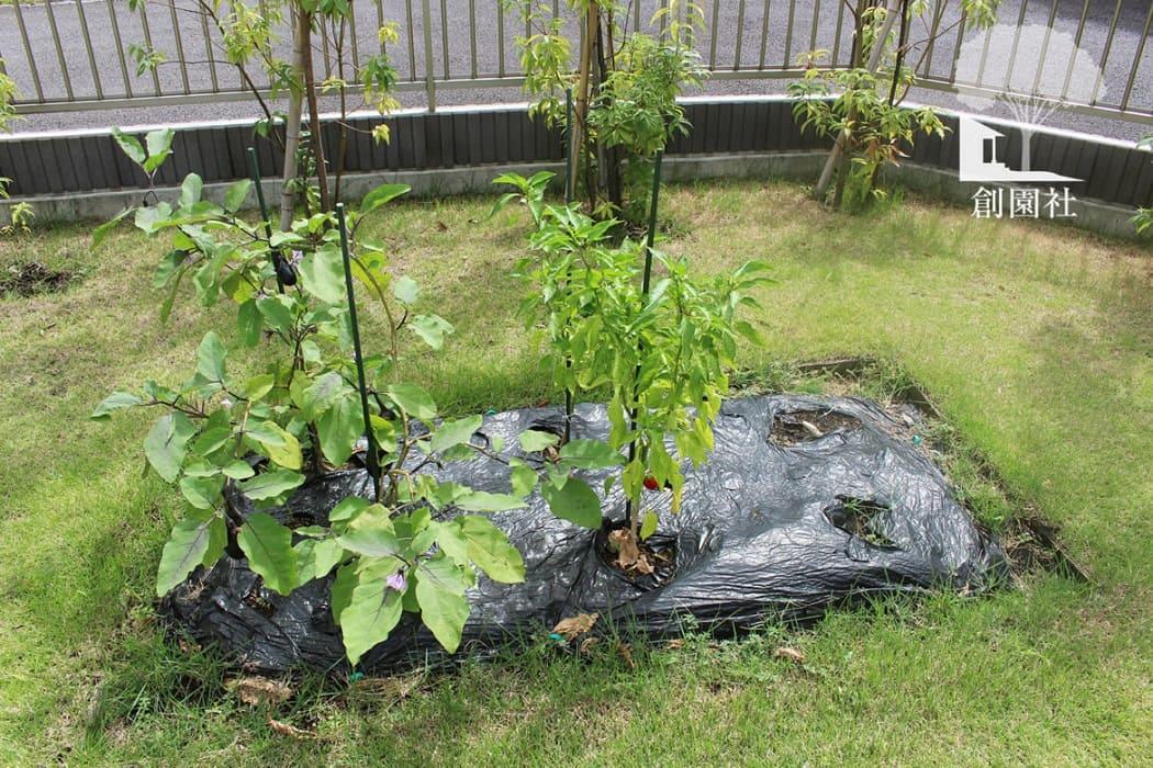高崎市 家庭菜園 ポタジェ