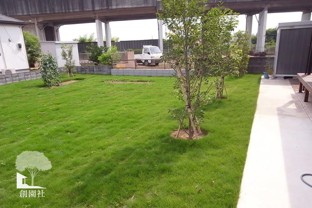 深谷市 芝生 天然芝 シンボルツリー