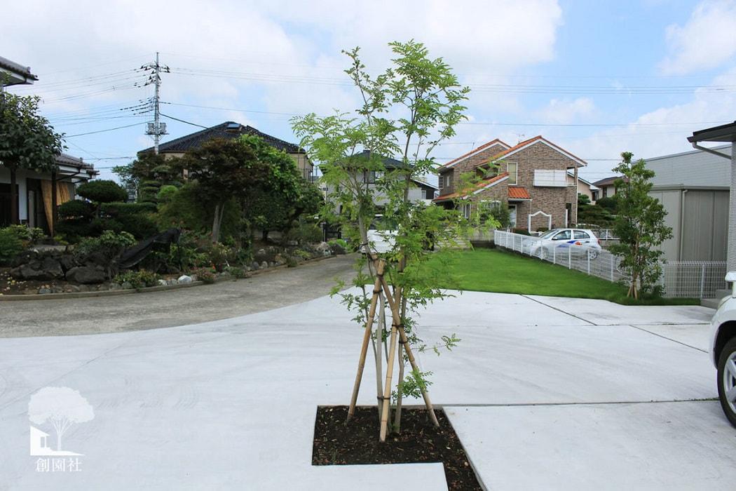 高崎市 シンボルツリー