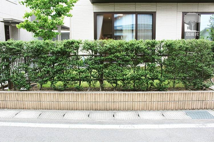 前橋市 新築外構 生垣